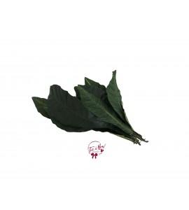 Leaves: Long Leaves Bush