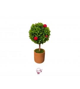 Plant: Apple Tree Plant