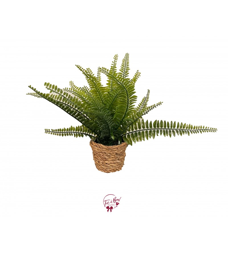 Plant: Fern and Rope Plant